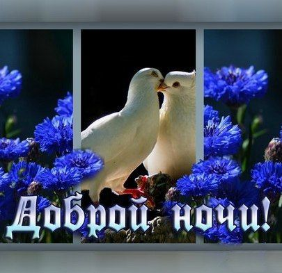 Открытки пожеланиями доброго утра с голубями, рисовала открытках текст