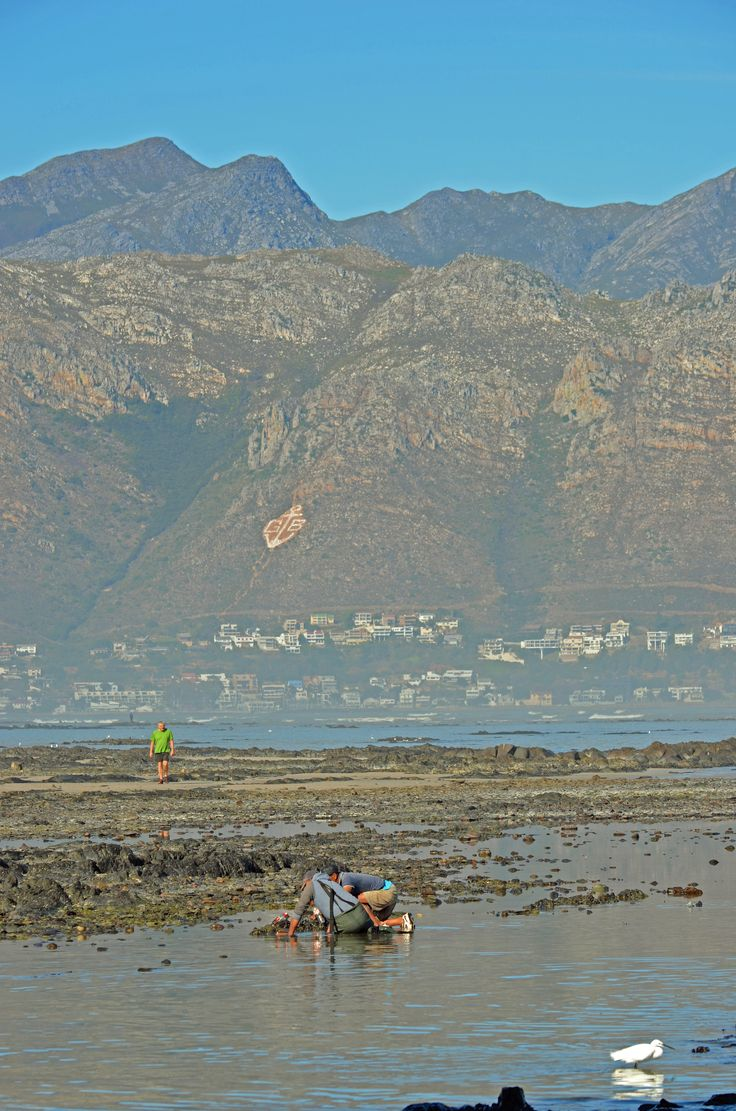 Looking for fish and fish bait on the beach in front of Greenways Golf Estate in the Strand - Cape Town  #bait #fish #Strand #Greenways #greenwaysgolfestate