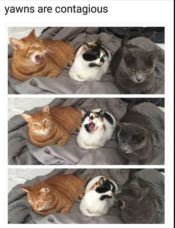 Funny Pictures That Will Keep You Laughing For Hours - 7. I yawned after reading this! #CatGatos