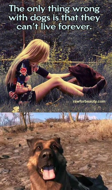 Except in #Fallout4 #Dogmeat FTW!  dogmeat