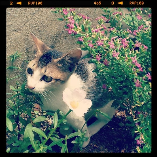 CP Mohammadh - A stray kitten who hangs out in my back yard...