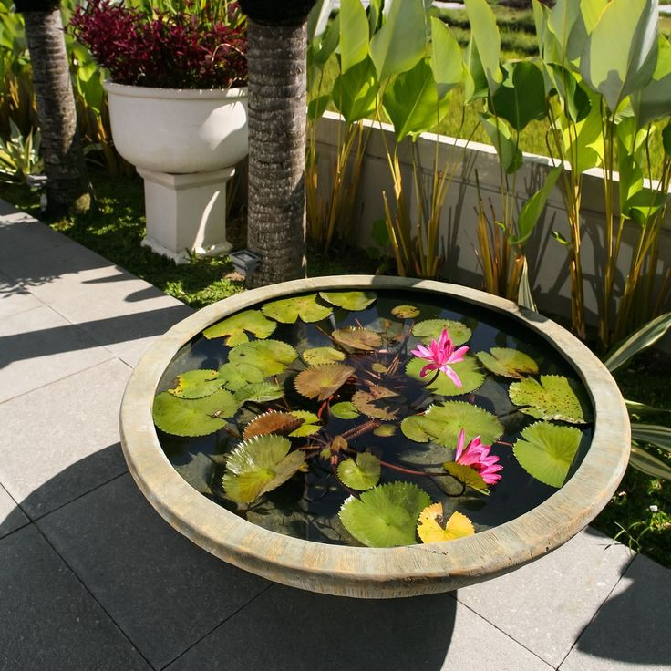 Containers and planters can be converted easily into a miniature water garden big enough for most aquatic plants but small enough for the deck or patio.