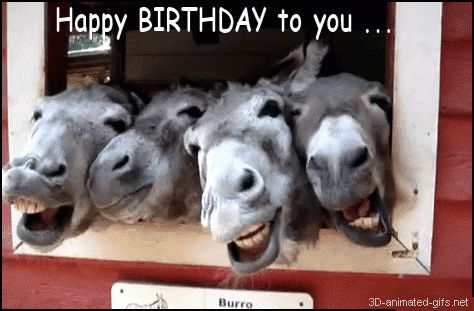 happy birthday quotes | donkey+animals+happy+birthday+quotes+funny+for+best+friends+quotes