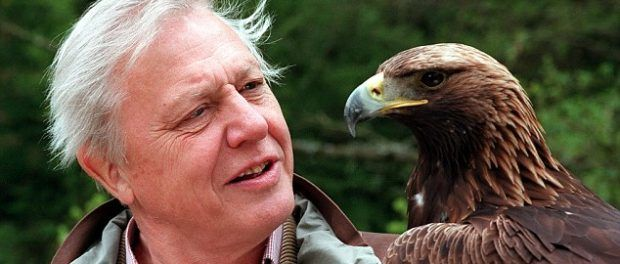"""Beware of """"Sir David Attenborough Dies Age 90"""" Celebrity Death Hoax: Sir David Attenborough is NOT DEAD. The hoax below, which claims that English broadcaster and naturalist has died at the age of 90 at Kings Hospital, London, is another reason why you should always use popular and reputable news websites as your source of information. The website: """"www.professionalmac.com,"""" and others like it, where the fake story has been published, are fake-news websites. The fake-webs..."""
