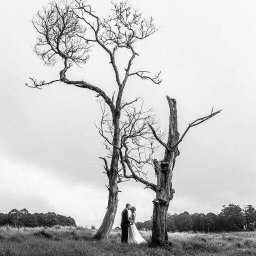 Wedding photography spicers peak lodge jess and jeremy