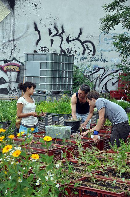Urban gardening in Berlin-Kreuzberg: Prinzessinnengarten http://prinzessinnengarten.net/ Opposite to #Modulor and #LinkleNähinstitut WE LIKE!