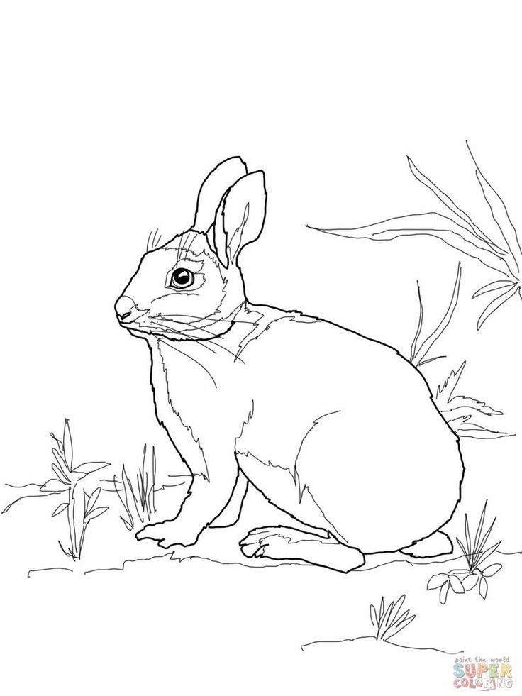 14+ Supercoloring rabbit information