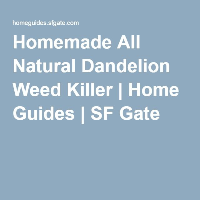 Homemade All Natural Dandelion Weed Killer | Home Guides | SF Gate