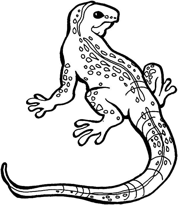 Lizard Great Monitor Lizard Coloring Pages Monitor Lizard Coloring Pages Online Coloring Pages