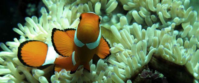 anambas archipelago Anambas Archipelago, Hidden Paradise at West Indonesia  Vacation snorkling marine sport Diving beauty undersea beauty reefs beauty corals