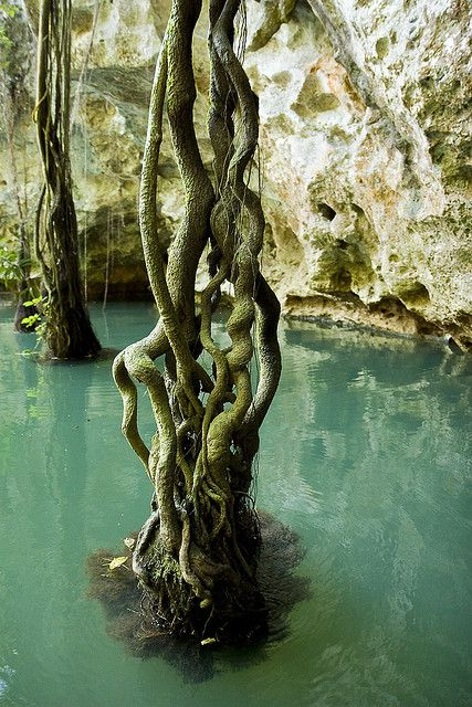 Near the entrance of Barton Creek Cave in Belize