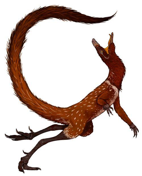 Dromomeron romeri, D. gregorii, D. gigas   A Dinosaur A Day