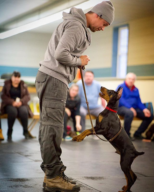 Adam And Monty The Dobermanpuppy Are Working On Their Tricks For