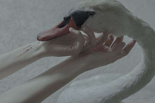 """His own image; no longer a dark, gray bird, ugly and disagreeable to look at, but a graceful and beautiful swan. To be born in a duck's nest, in a farmyard, is of no consequence to a bird, if it is hatched from a swan's egg"" -Hans Christian Andersen (ph.: Laura Makabresku)"