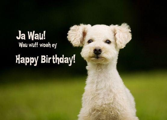 Ja Wau Wuff Woa Ey Happy Birthday Pokamax 11 Geburtstag