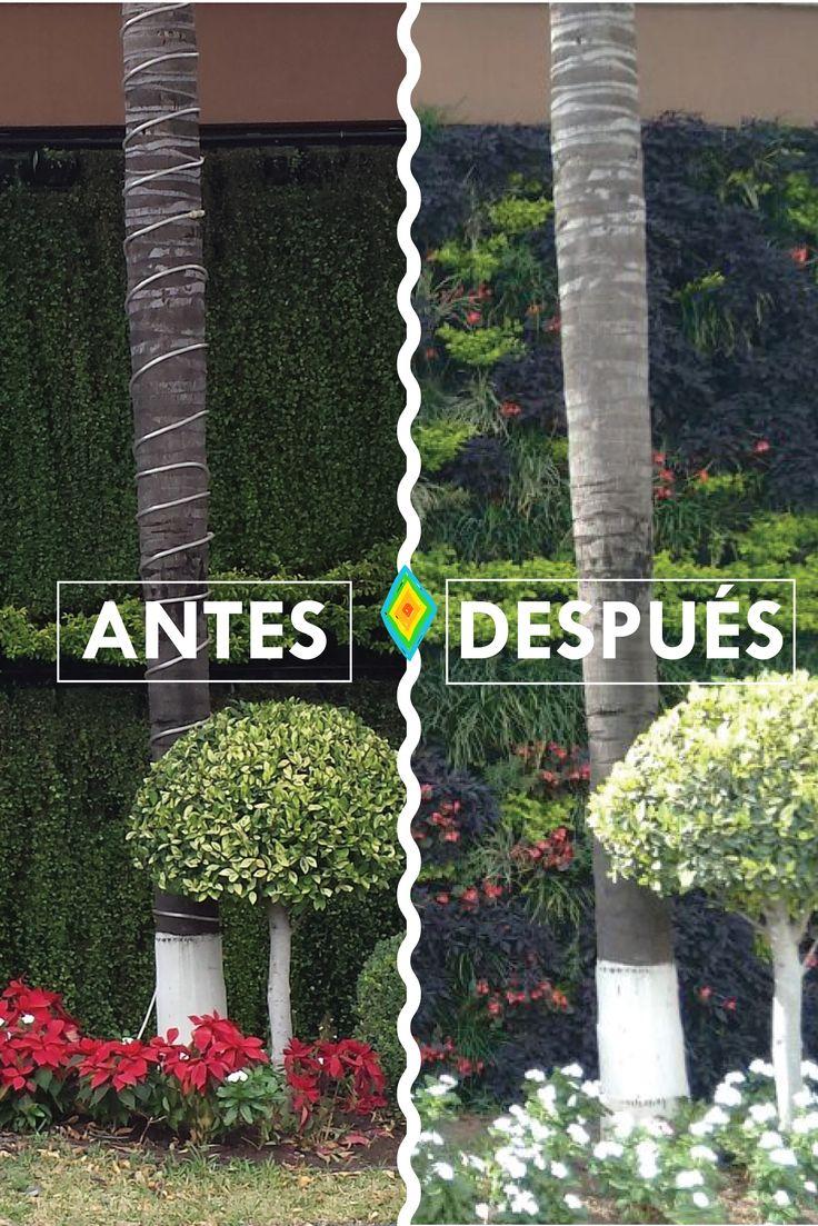 Mejores 12 im genes de antes y despu s jardines verticales for Ver imagenes de jardines de invierno