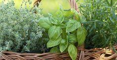 12 plantas que alejarán las moscas de tu jardín y hogar