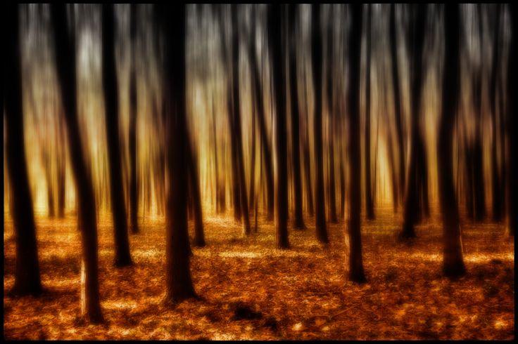 The Dunwich Forest by András Sümegi on 500px