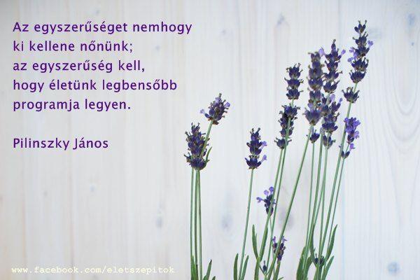 """""""Az egyszerűséget nemhogy ki kellene nőnünk; az egyszerűség kell, hogy életünk legbensőbb programja legyen."""" (Pilinszky János: Az egyszerűek imája) - A kép forrása: Életszépítők # Facebook"""