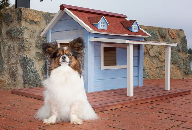 Phoebe with a cute blue cottage by Ritzpetz