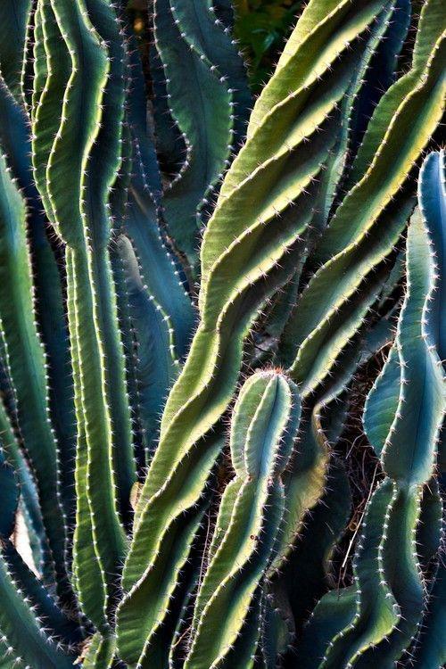 shapes + shades of cacti