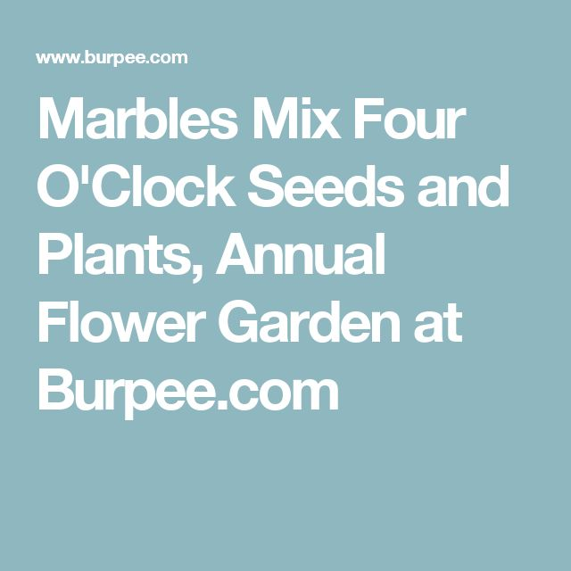 Marbles Mix Four O'Clock Seeds and Plants, Annual Flower Garden at Burpee.com