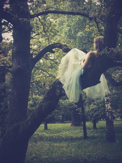 ....im Baum