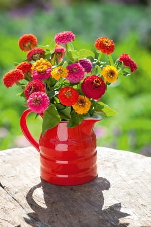 Molly's Jug with Zinnia 'Sprite Mix'