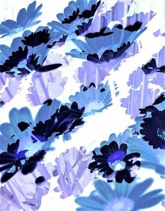 #abstract #bloemen #kunstfotografie #blauw #fotografie