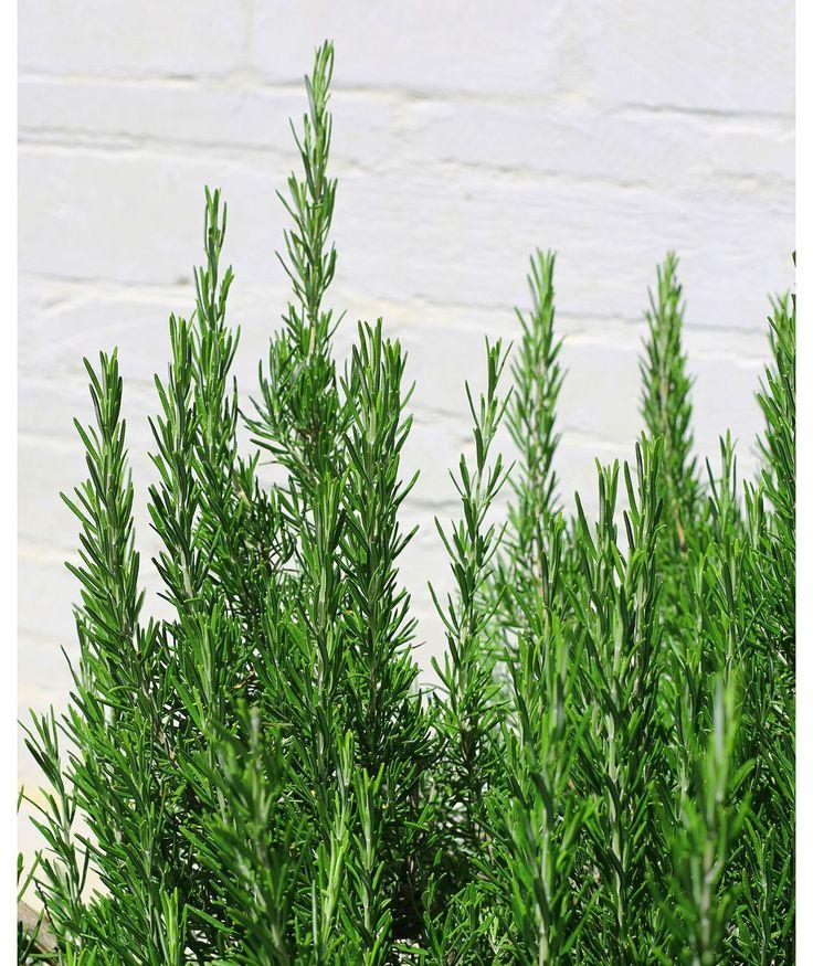 10 Best Plants Images On Pinterest Patio Plants Plants