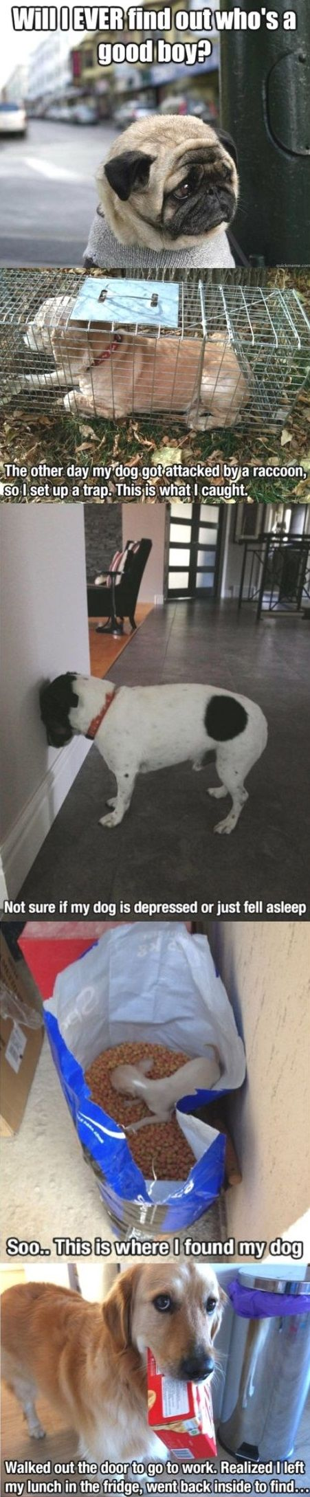 Are These Cute or Funny Dog Images? Maybe They are Both!