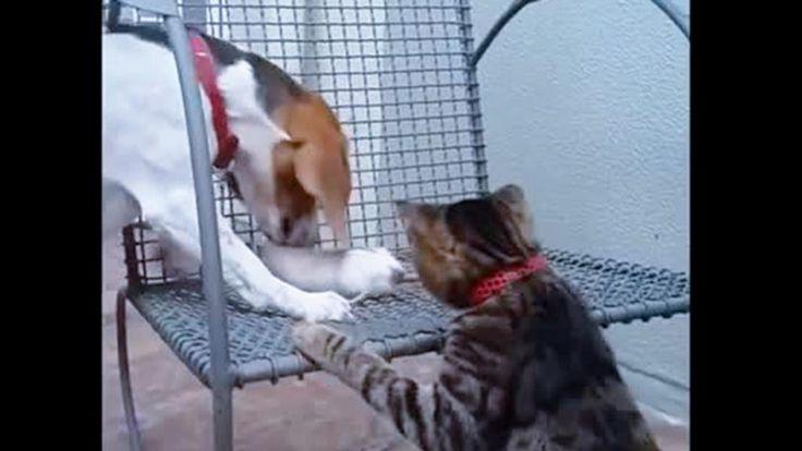 Dovrebbero essere tre nemici, invece sembrano essere tre amici per... il pelo. Sono un cane, un gatto e un topo che giocano tranquilli su una sedia senza che qualcuno si faccia dei problemi. ° twitter@fulviocerutti °
