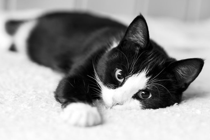 "mariusu: ""(via 500px / Cat by Marius Unes) """