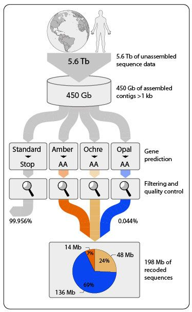Workflow (depicted in the amount of DNA sequence data generated in trillion of nucleotide bases [Tb] and billion bases [Gb]) to identify the set of overlapping DNA segments that contain stop codon (Amber, Ochre, Opal) reassignments. (Figure by Patrick Schwientek)