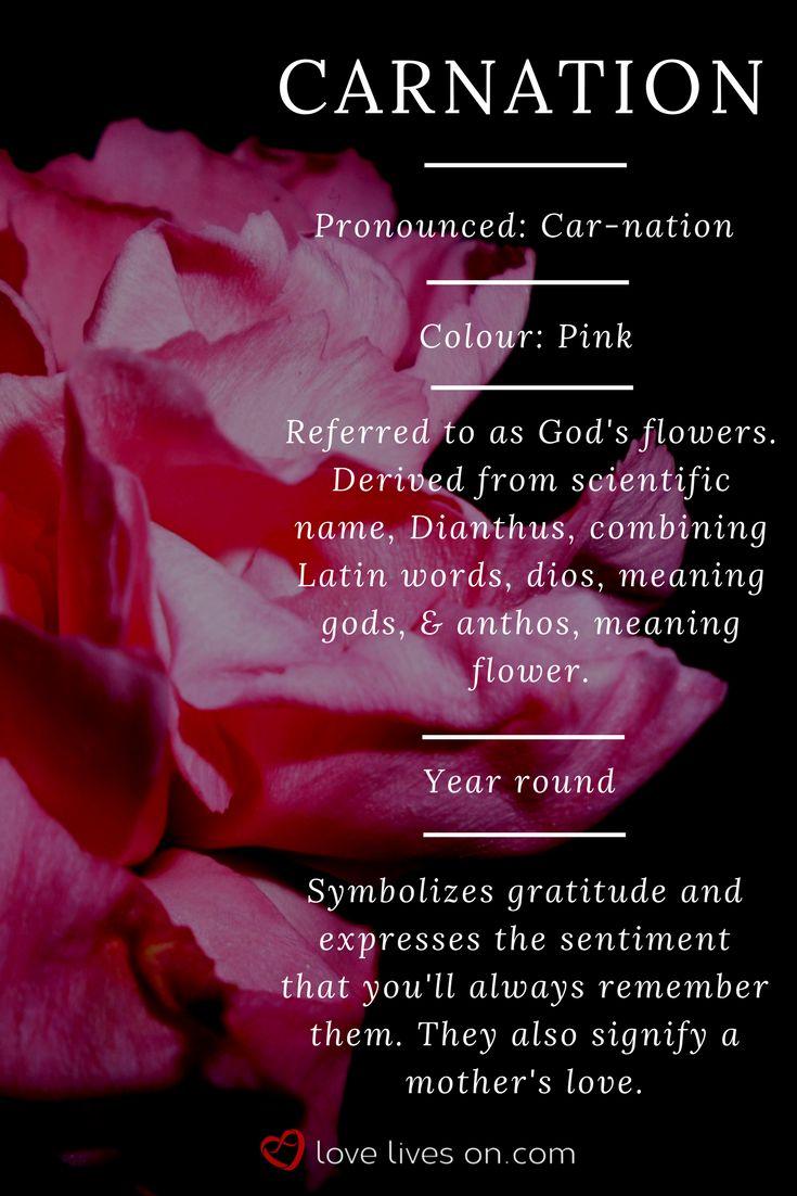 Best 25 carnation meaning ideas on pinterest january flower 10 best funeral flowers carnation meaning biocorpaavc