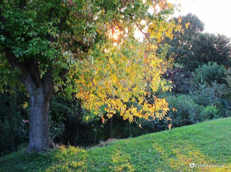 Il sole sulla chioma giusta dà l'effetto delle mèches a quest'albero davvero molto bello all'ora del tramonto.