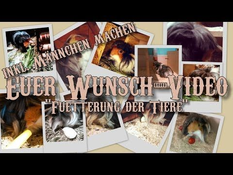 Euer Wunsch-Video: Füttern (inkl. Männchen machen) - #Meerschweinchen - YouTube  #Food #GuineaPig #GuineaPigs