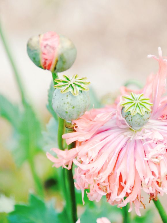 Natural pastels in the garden