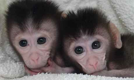 Just two baby monkeys hanging out sucking their teeny tiny hands... | 27 Tiny Animals That Will Warm Your Heart Today