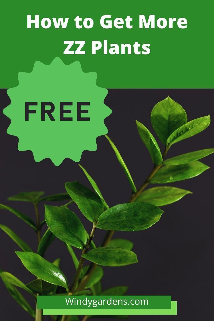 How To Propagate Zz Plants For Free In 2020 Plants Zz Plant Propagation