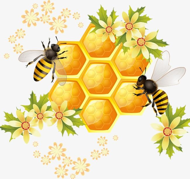 Bee Insect Cartoon Png Transparent Image And Clipart For Free Download Bee Drawing Bee Painting Honey Art