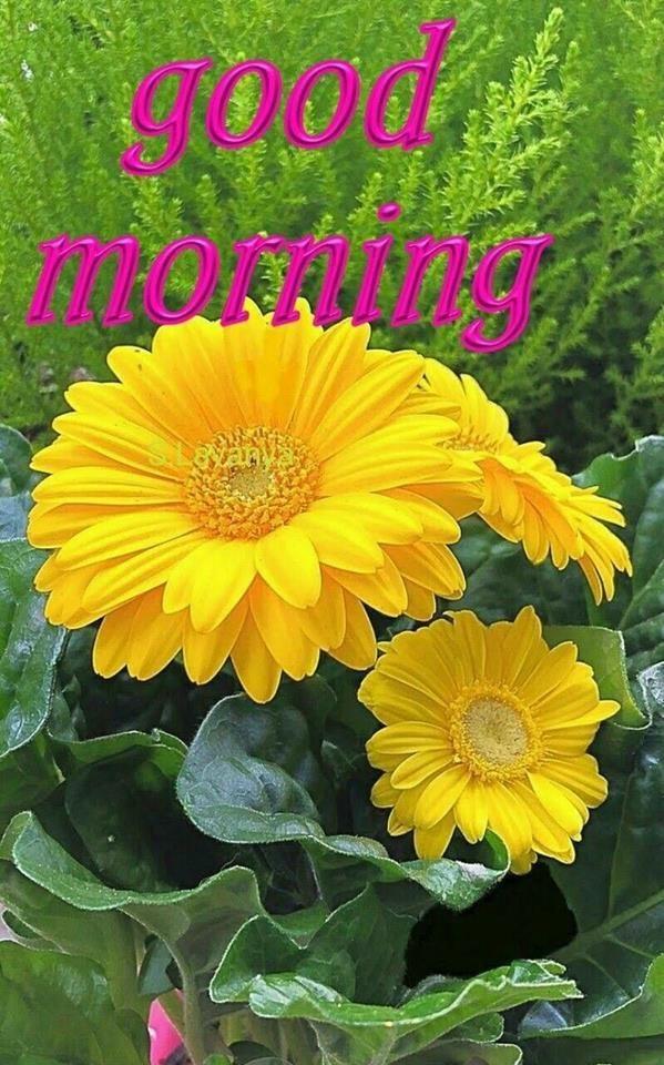 Yellow Flower Good Morning Quote morning good morning good