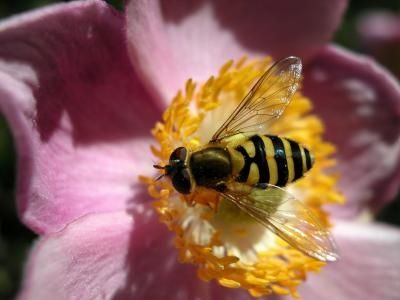 How to Make Homemade Garden Bug Spray... Worth a try.