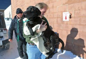 Volunteers scour cold St. Louis streets for animals in jeopardy - STL Post-Dispatch article describing efforts to take care of neglected and stray animals during the snowstorm / cold snap in January 2014