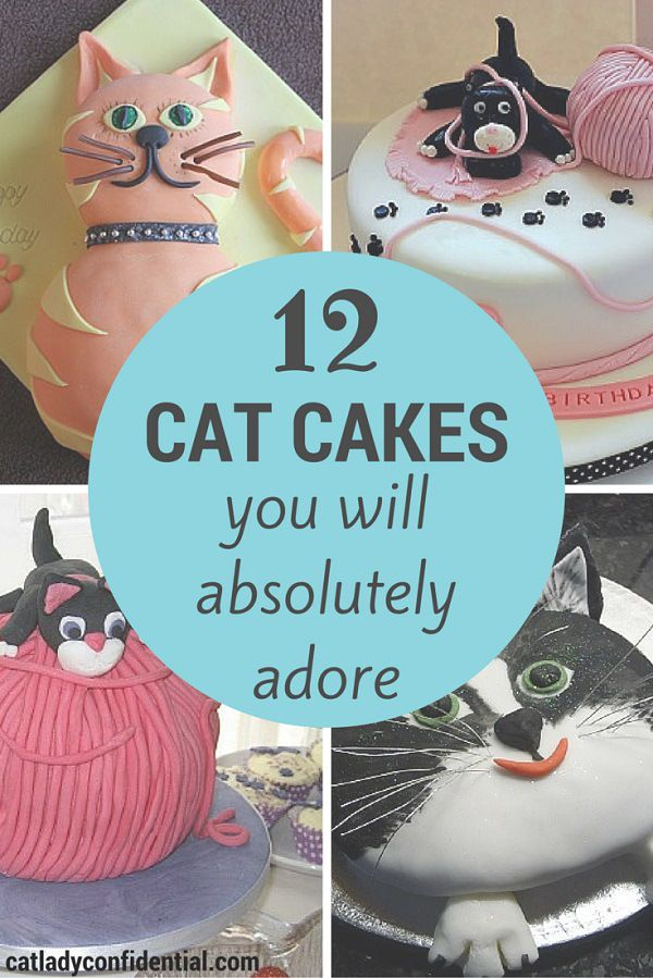 12 Cat Cakes You Will Absolutely Adore                                                                                                                                                                                 More
