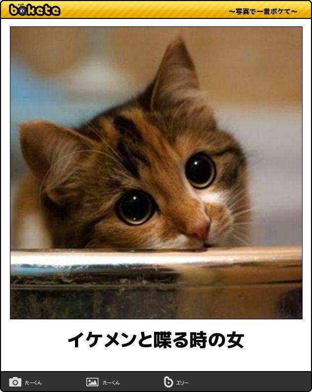 【新年から抱腹絶倒】寒さがぶっ飛ぶ猫の傑作ボケて12選