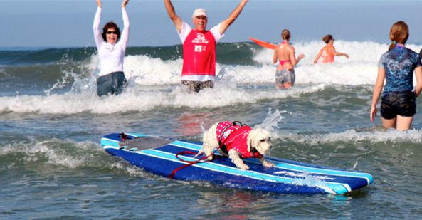 54 Reasons You Should Go To A Dog Surfing Competition Before You Die