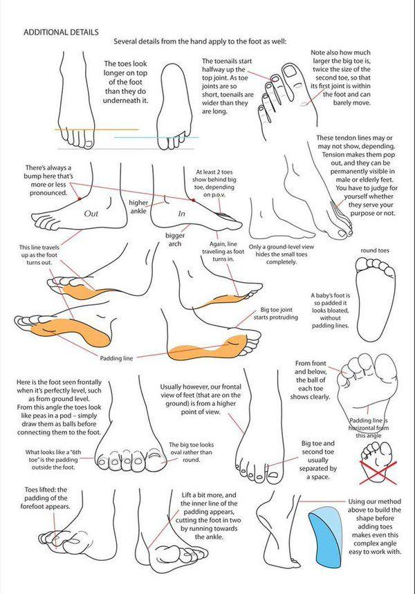 The 28 best 인체해부학/부위)발 images on Pinterest | Human anatomy ...