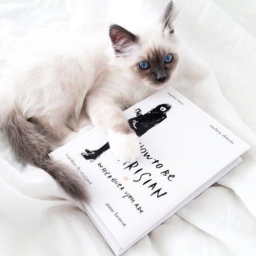 Image via We Heart It #animals #book #cat #cats #cute #fashion #inspiration #life #moment #parisian #style