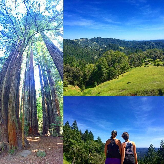 California National, State, Regional & Local Parks - CaliParks : Armstrong Redwoods State Reserve